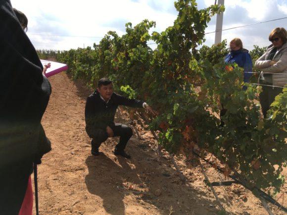 Im Weingarten mit Mr. Dong. (president wine assiciation)