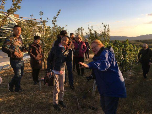 Mit Gloria im Weinberg bei Pula Valley