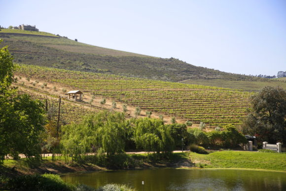Weinberge des Jordan Wine Estate