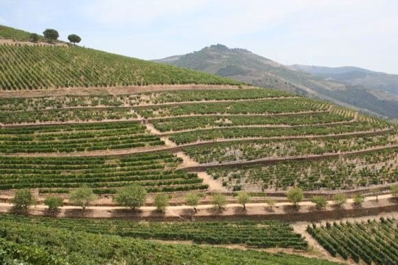 Weinbergsterrassen im Douro-Tal