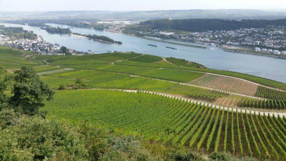 Blick in den Rheinau vom Niederwalddenkmal