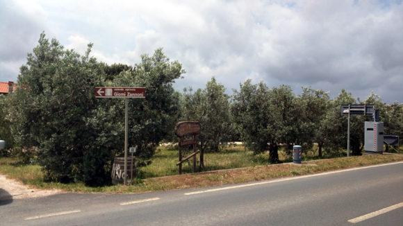 Toskana Giomi Zannoni Einfahrt